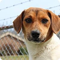 Adopt A Pet :: Elliot - Harmony, Glocester, RI