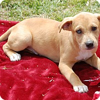 Adopt A Pet :: Riley - Manning, SC