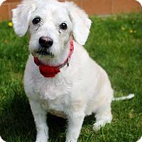 Adopt A Pet :: Margo - Appleton, WI