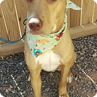 Adopt A Pet :: LowKey - Mesa, AZ