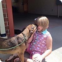 Adopt A Pet :: Joey - Burlington, NJ