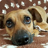 Adopt A Pet :: Max - Yucaipa, CA