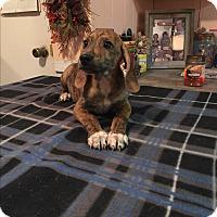 Adopt A Pet :: Jasper - Kittery, ME