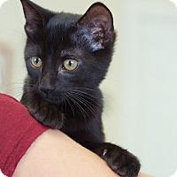 Adopt A Pet :: Parker - Huntsville, AL