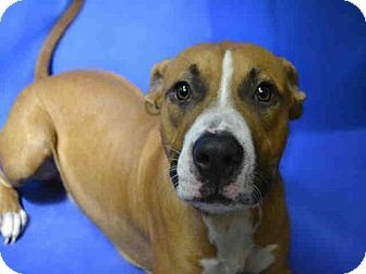 Hound (Unknown Type) Mix Dog for adoption in Ocala, Florida - CHEWY