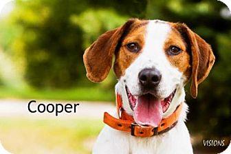 Treeing Walker Coonhound Mix Dog for adoption in Cedar Rapids, Iowa - Cooper