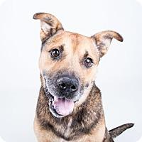 Adopt A Pet :: Umpa - Adrian, MI