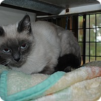 Adopt A Pet :: Gracie - Bay City, MI