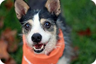 Terrier (Unknown Type, Medium) Mix Dog for adoption in Fairmont, West Virginia - Dozer