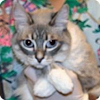 Adopt A Pet :: Ladybug - Wildomar, CA