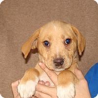Adopt A Pet :: Trapper - Oviedo, FL