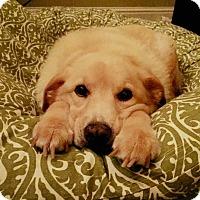 Adopt A Pet :: Belle - Memphis, TN