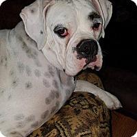 Adopt A Pet :: Maximus - Woodinville, WA