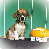 Adopt A Pet :: Dak - Troutville, VA