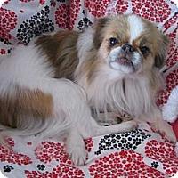 Adopt A Pet :: Pebbles - Aurora, CO