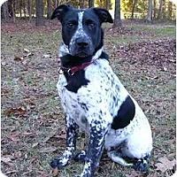 Adopt A Pet :: Morris - Mocksville, NC