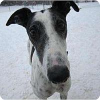 Adopt A Pet :: Gus (Jc Fergus) - Chagrin Falls, OH