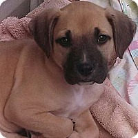 Adopt A Pet :: Jude-adoption pending - Glastonbury, CT