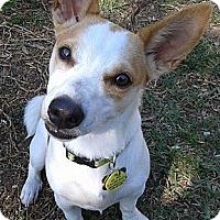 Adopt A Pet :: Hooch - Jacksonville, FL