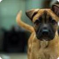 Adopt A Pet :: Mandie Pants - Phoenix, AZ