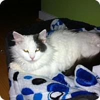 Adopt A Pet :: HOPE - MECHANICSVILLE, VA