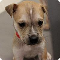 Adopt A Pet :: Mork - Atlanta, GA