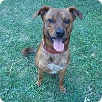 Adopt A Pet :: Slade - Houston, TX