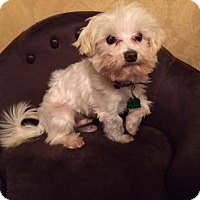 Adopt A Pet :: Harley*Adopted - West Harrison, NY