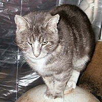 Adopt A Pet :: Blaze - Wanaque, NJ