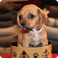 Adopt A Pet :: Habanero - 2 pounds - Los Angeles, CA