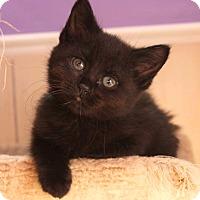 Adopt A Pet :: Daena - Colorado Springs, CO