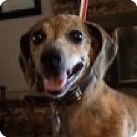 Adopt A Pet :: Cooper - McLoud, OK