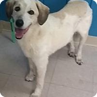 Adopt A Pet :: Wally - Avon, NY