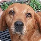 Adopt A Pet :: BoBo