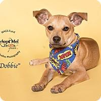 Adopt A Pet :: Dobbie - Houston, TX