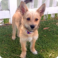 Adopt A Pet :: Herman (BH) - Santa Ana, CA