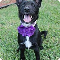 Adopt A Pet :: Gypsy - New Smyrna Beach, FL