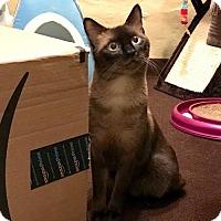 Adopt A Pet :: Samson - Philadelphia, PA