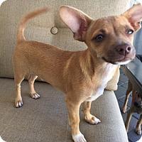 Adopt A Pet :: Donny - San Diego, CA
