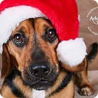 Adopt A Pet :: Mighty Max - Cincinnati, OH
