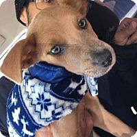 Adopt A Pet :: Tyler - Montpelier, VT