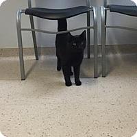Adopt A Pet :: Baymax - Janesville, WI