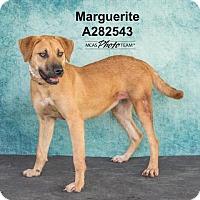 Adopt A Pet :: MARGUERITE - Conroe, TX