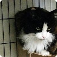 Adopt A Pet :: Tinkerbell - Windsor, CT