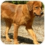 Photo 3 - Golden Retriever Mix Dog for adoption in Hagerstown, Maryland - Tawney