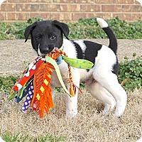 Adopt A Pet :: *Adam - PENDING - Westport, CT