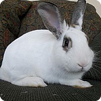 Adopt A Pet :: Beau - North Gower, ON