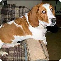 Adopt A Pet :: Duncan - Phoenix, AZ