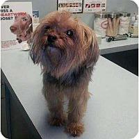 Adopt A Pet :: Sophie - Beechgrove, TN