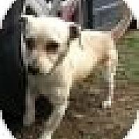 Adopt A Pet :: Drover - Seattle, WA